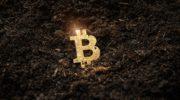 Мошенничество с криптовалютой с октября выросло на 1000%